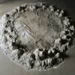notions of infinite growth | unfired clay & mixed media | 9ft x 9ft x 1ft